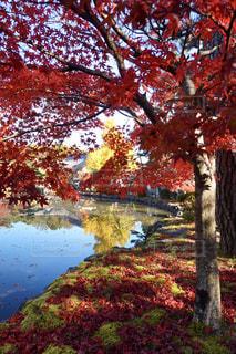 古刹の萌える秋の写真・画像素材[2510763]