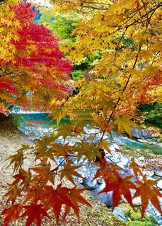 多色の葉と清流のコラボレーションの写真・画像素材[2510809]