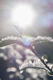 凍える朝に雪を照らす光の写真・画像素材[2632020]