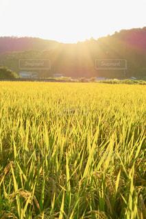 自然,風景,空,秋,太陽,稲穂,山,光,田んぼ,実り