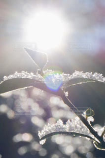 雪の朝の写真・画像素材[2860800]