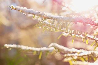 自然,空,冬,雪,太陽,枝,葉,光