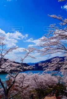 恵那峡の桜と青空の写真・画像素材[3041247]