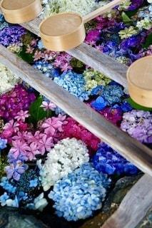 紫陽花で埋め尽くされた手水舎の写真・画像素材[3377753]