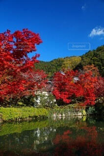 古刹の秋晴れ紅葉の写真・画像素材[3803819]