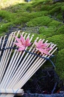秋の朝の写真・画像素材[3807064]