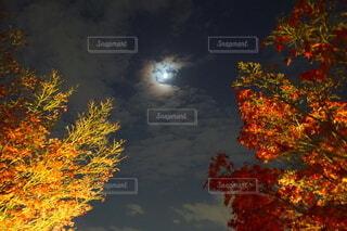 月と紅葉の写真・画像素材[3920800]