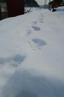 足跡の写真・画像素材[4176837]
