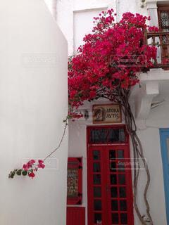 白い壁と赤いドアのある風景の写真・画像素材[4457406]