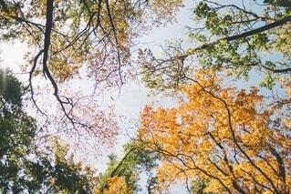 紅葉する木々の写真・画像素材[3713820]