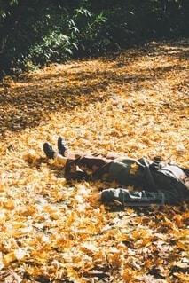 芝生落ち葉の絨毯の写真・画像素材[3713817]