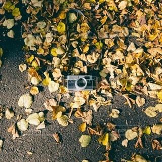 岩落ち葉とカメラの写真・画像素材[3713811]