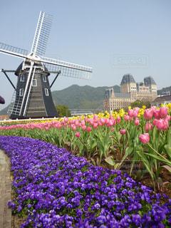 春のハウステンボスの写真・画像素材[1368437]