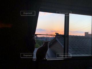 猫,空,夕日,夕焼け,窓,夕方,シルエット,ねこ,新潟県