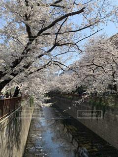 フェンスを通って流れる川の写真・画像素材[4311925]