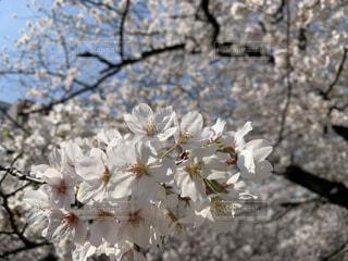 花のクローズアップの写真・画像素材[4311943]