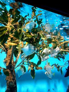 サンシャイン水族館の魚の写真・画像素材[1312874]