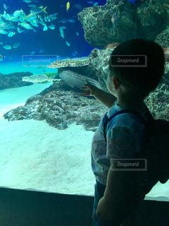 魚と男の子の写真・画像素材[1312880]