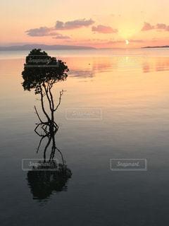 マングローブと夕日の写真・画像素材[1292222]