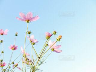 近くの花のアップの写真・画像素材[1553503]