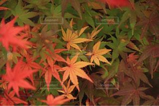 秋色の写真・画像素材[1553811]