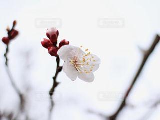 花の写真・画像素材[2015352]
