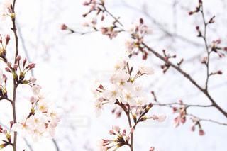 花の写真・画像素材[2015945]