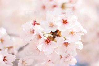 花の写真・画像素材[2018772]