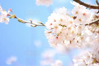 花の写真・画像素材[2027217]