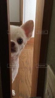 犬の写真・画像素材[44442]