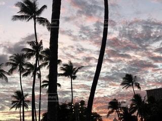海,椰子の木,夕焼け,夕暮れ,海辺,ヤシの木,ハワイ,黄昏,夕陽,リゾート,うろこ雲,鱗雲