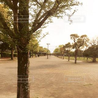 公園の木の写真・画像素材[2283030]