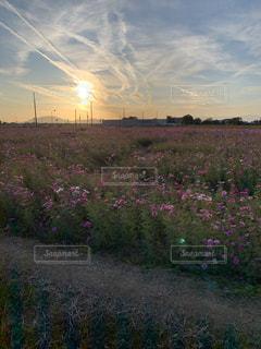 空,花畑,屋外,太陽,夕焼け,景色,光