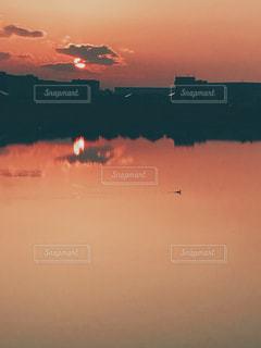 夕日,鳥,夕焼け,水面,池,水鳥