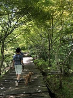 子ども,犬,自然,風景,後ろ姿,木漏れ日,樹木,小学生,トイプードル,伊豆,ハイキング,男の子,愛犬,息子,緑のトンネル,静岡県,愛息子,家族でお出かけ,愛犬とお出かけ