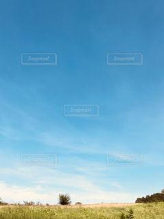 大規模なグリーン フィールドの写真・画像素材[1322457]