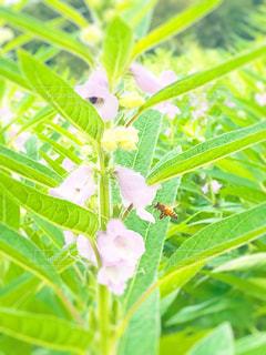 近くの緑の植物をの写真・画像素材[1373277]
