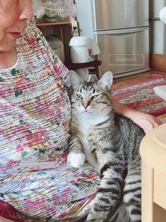 猫を持っている人の写真・画像素材[1401176]