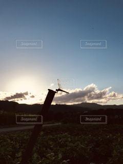 空,秋,夕日,田舎,トンボ,秋の空,秋の夕暮れ