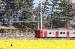お花畑,電車,菜の花,佐賀,黄色い