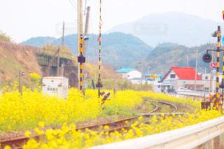黄色い電車道の写真・画像素材[1852300]