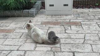 しっぽで遊ぶ子猫の写真・画像素材[4647900]