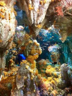 海底洞窟に咲く花畑の写真・画像素材[2360468]
