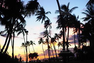 ヤシの木とビーチの写真・画像素材[1297508]