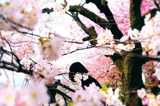 植物の花と木の写真・画像素材[1370305]