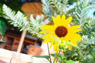 近くの花のアップの写真・画像素材[1372577]