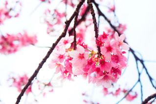 近くの花のアップの写真・画像素材[1372579]