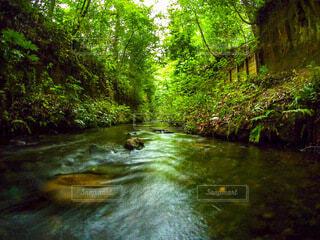 川の流れの写真・画像素材[3680588]