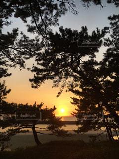 自然,風景,海,太陽,夕暮れ,樹木,草木
