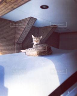 涼んで寝こ‼︎の写真・画像素材[1335866]
